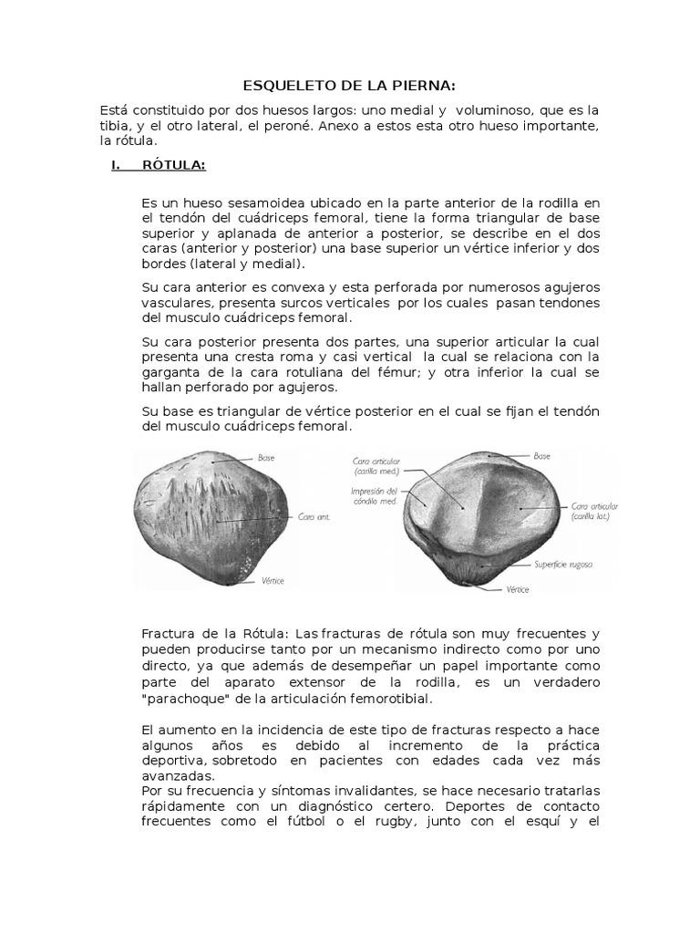 Hermosa Hueso Medial De La Pierna Foto - Anatomía de Las Imágenesdel ...
