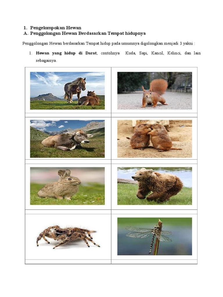 6600 Koleksi Gambar Hewan Berdasarkan Tempat Hidupnya Gratis Terbaik