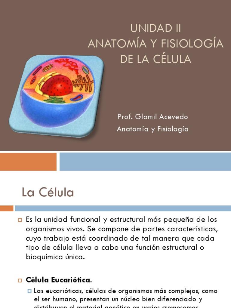 Lujoso Anatomía Y Fisiología De Una Célula Motivo - Anatomía de Las ...
