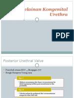 Kelainan Kongenital Urethra