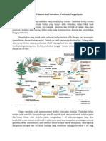 Mekanisme Polinasi Dan Fertilisasi Gymnospermae