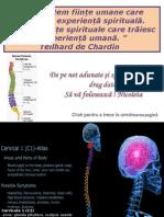 Coloana_vertebrala