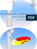 Patología de La Médula Ósea