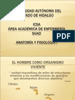 anatomia.ppt