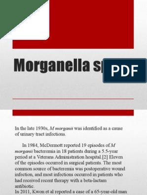 1 morganella morganii