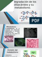 Metabolismo y La Degradación de Los Polisacáridos