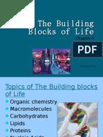 The Building Blocks of Life- Sabrina
