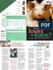 A pig's story