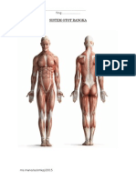 Sistem Otot Rangka