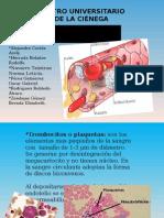 4-Serie trombocitica.ppt