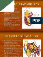 GLANDULAS SALIVALES2