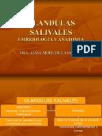 GLANDULAS SALIVALES1