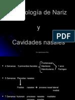 Embriologia de Nariz y Cavidades Nasales