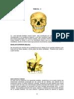Tema 4 Anatomía Humana