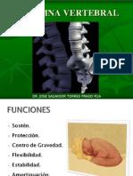Anatomia Basica de la columna
