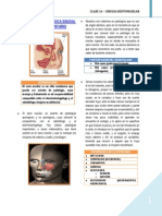 16 - Patologia Quirurgica Sinusal de Origen Dentario