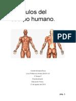 Músculos Del Cuerpo Humano Informe