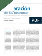 2. Reparacion de Las Neuronas