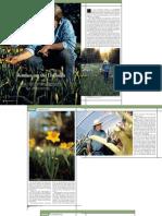 The Daffodil Plantsman