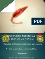 Ppt zoonosis hidatidosis