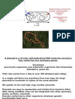 4 Plasmids