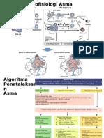 Patofisiologi Asma + Algoritma
