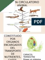 Sistema Circulatorio Animal Ade (3)