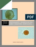 Protozoarios y helmintos