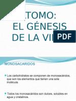 Genesis de La Vida (Molecular)