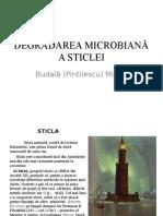 Degradarea microbiana a sticlei.ppt