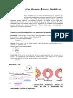 Placentacion en Especies Domesticas