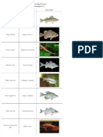 List of Freshwater Fish Beginning With W