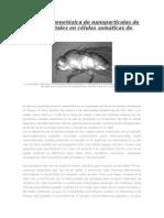 Evaluación genotóxica de nanoparticulas de óxido de metales en células somáticas de Drosophila.docx