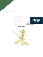 Arracacia Xanthorrhiza Bancroft