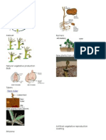 Vegetation Processes