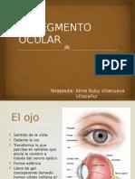 El Segmento Ocular