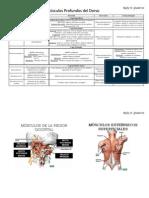 Dorso Anatomía Humana