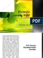 Drymaria Cordata Wild