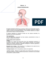 TEMA 14 Anatomía Humana