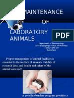 Maintainance of Lab Animals