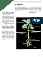 Como a Planta Da Soja Desenvolve