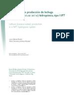 Produccion de Lechuga Americana Lactuca Sistema NFT