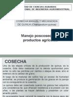 Cosecha de Quinua