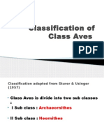 Classification of Class Aves
