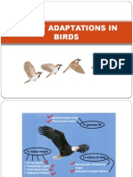Flight Adaptations in Birds