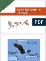 Flight Adaptations in Birds
