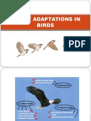 Flight Adaptations in Birds | Birds | Vertebra