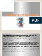 Migration in Birds