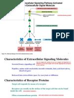 Cell Signaling I