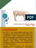 Charla Colera Porcino Para Profesionales